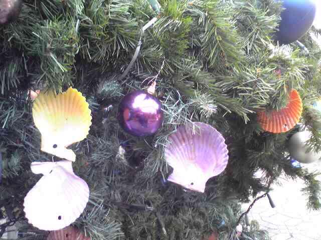ツリーの貝・緋扇貝
