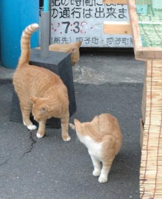 今日(2009.10.10)のにゃんこ