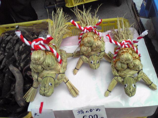 今日のにゃんこ と 亀(2009.12.22)