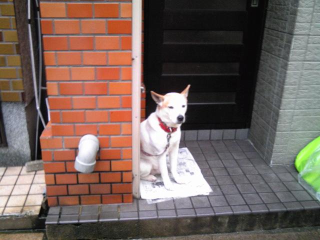 今日の呼子朝市とわんこ(2010.02.10)